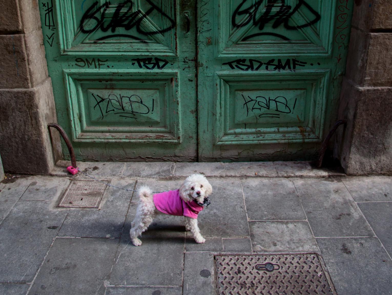 Zaproszenie na spotkanie po plenerze fotograficznym w Barcelonie